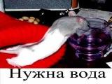 Таркан  Караоке =)))))))) Ахахаах!!!