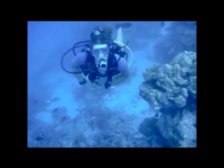 Манта и акулы на Мальдивах