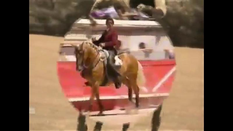 Легенда корриды. Конь Мерлин