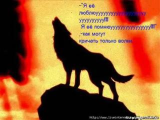 Любовь Одинокого Волка.(Это видео тронет до слёз)