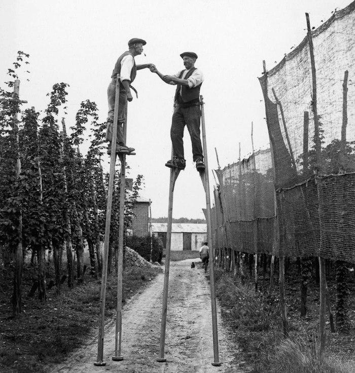Сборщики хмеля, Англия, 1928 год.