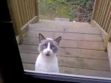 Кот просится домой и ругается на хозяйку