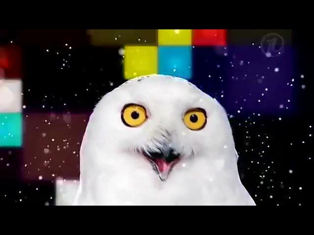 OWL TRIPP