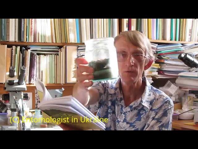 Как Легко Разводить Жука-Знахаря Для Корма Рыбкам, by Entomologist in Ukraine