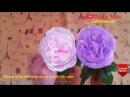 Cách làm hoa giấy - Hướng dẫn làm hoa hồng Juliet - David Austin Rose Crepe paper flower