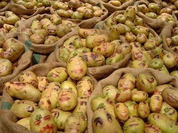 Картофель — Убийца мозга