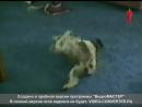 Улётные животные. 34-ый выпуск. 09.01.2013