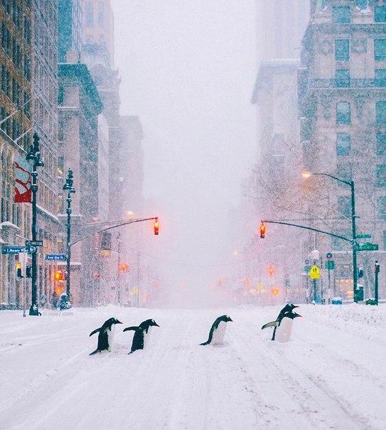 Вы знали,что когда пингвины находят
