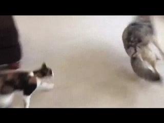 Страшнее кота зверя нет