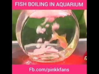ПРИКОЛ . Случайно на плиту поставили аквариум с рыбкой .