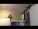 Funny Parkour Cats Video Compilation 2016 [Full HD,1080p]
