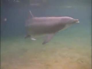 Роды в воде - Дельфины