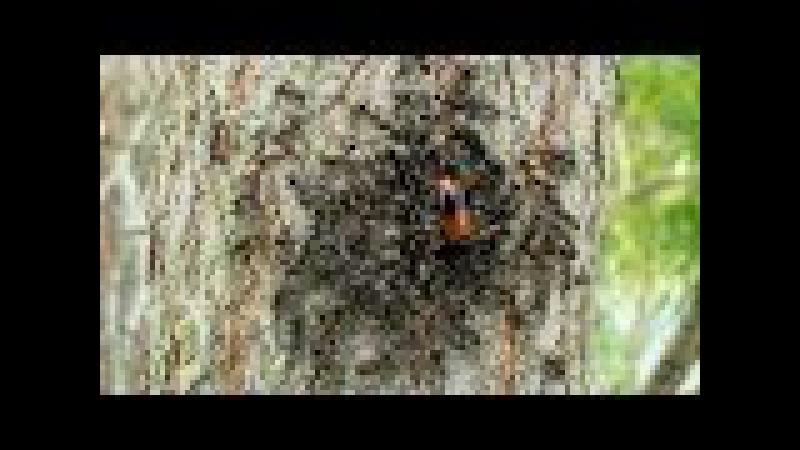 Муравьи и их добыча
