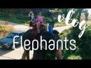 VLOG Экскурсия на слонах. Купание со слонятами о. Ко Чанг, Тайланд День 3 》