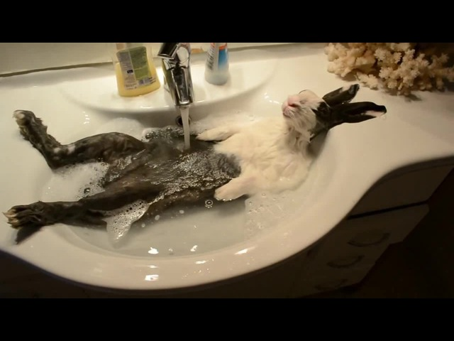 Bunny takes a shower · coub, коуб