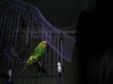 Небольшие покупки из зоомагазина для животных.Плохая качелька для попугая.Мои питомцы.?