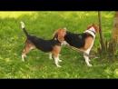 Ева и Габи на прогулке