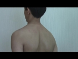 Исследование органов дыхания. Перкуссия легких. Пальпация грудной клетки. Аускультация легких. Пропедевтика внутренних болезней