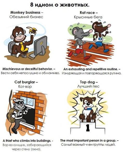 8 идиом о животных)Пополняем словарный запас)