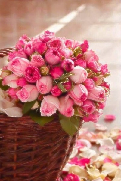 У цветов не бывает будней, они всегда одеты празднично.