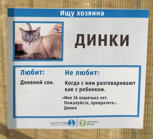 The shelter for cats has come up with an unusual solution to help animals find
