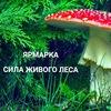 Ярмарка Сила Живого Леса