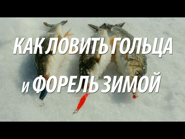 Ловля форели и гольца на зимней рыбалке с Нормундом Грабовскисом