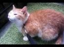 Котик спасенный с улицы от живодерки.