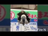 Подборка приколов з животными 2 / Fire N