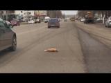 г.Салават - очень жалко животных, умирающих на дороге...
