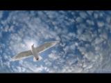 Нас бьют мы летаем...От Натали Распутиной.
