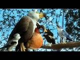 Замбезия 3D трейлер Рус