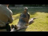 Giant Anaconda eats people Prank! - Гигантская анаконда жрет людей Прикол!
