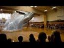 Голографическая проекция кита в спортивном зале школы
