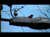 MADEVIL - ДЯТЕЛ 2 (HARDCORE) MMV #99