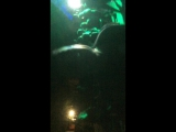 AQUA DJ PARADE IX