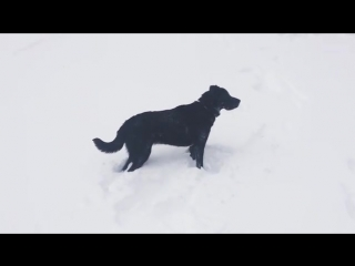POWDER DOG