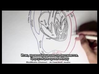 видео общее знакомство с организмом человека
