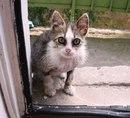 Почти 5 лет назад моя мама увидела, как дети таскают маленького грязного котенка.
