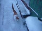 Я снег и кот