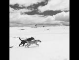 Собака друг сноубордиста