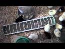 Первые сутки после инкубации цыплят дома