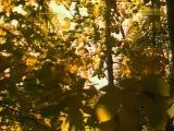 Надежда Обухова Осенние листья