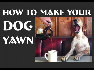 How to make your dog yawn
