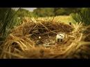 Minuscule - Season 2 Compilation 15 Minutes 2