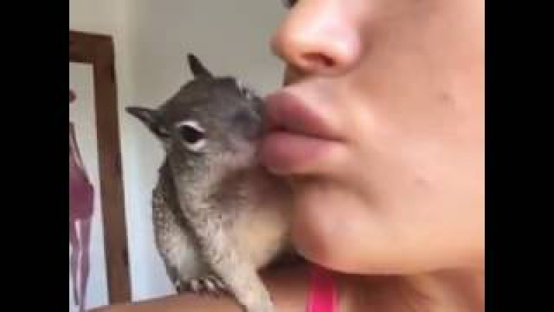 Julia Gilas on Instagram Did you ever see how squirrels kiss 🐿💋 @nova squirrel""