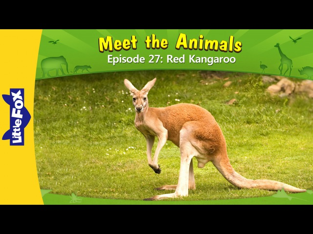 Meet the Animals 27 Red Kangaroo Level 2 By Little Fox