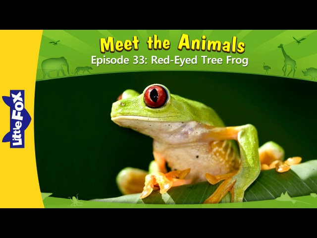 Meet the Animals 33 Red Eyed Tree Frog Level 2 By Little Fox