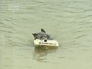 Т/С Собака по имени Снобз 3 серия (2003г)