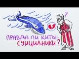117. Правда ли киты – суицидники — Научпок